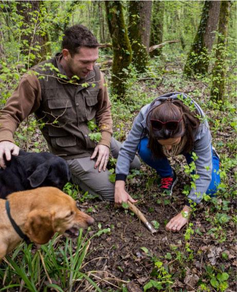 Truffle Tarandek What is the best dog for truffle hunting
